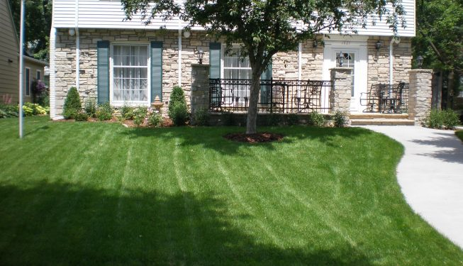 front lawn and driveway